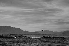 Vancouver Island Seascape (1) (.enKay) Tags: vancouverisland jamieswhalewatching tofino britishcolumbia nature wildlife landscape seascape whale graywhale sealion animals sealife sea ocean pacificocean canada canon 60d tamron 2470 clouds sky water island mountains hills rocks travelphotography blackandwhite bw black white contrast vacation