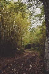 Path (jacopodemarco) Tags: sentiero montagna nature offroad colours colors season autunno autumn forest wood trees leaves mountain pathway path