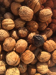 Les dernires noix // Last walnuts (geofana) Tags: composition autumn automne fruit walnut noix
