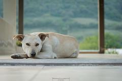 A dog's life (Mariano Colombotto) Tags: dog perro animal relax easy quiet tranquilo relajado nikon tucuman argentina infinitexposure autofocus