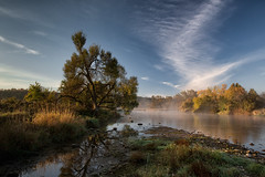 Morning mist (Mark Heine Photos) Tags: cirrus wilsonflats grandriver tree clouds canada ontario markheine morning elora sunrise field westmontrose ca