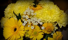 123/365 Anniversary Flowers (lindyloo86) Tags: flowers friends yellow white petals leaves sonyphotography sonycybershotdschx20v