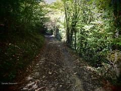 Strada di bosco e di ombra (sandra_simonetti88) Tags: path sentiero strada trail bosco wood forest woods valcamonica vallecamonica foresta italy lombardia nature natura