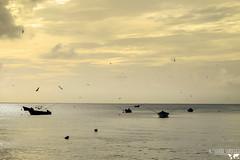 _BON9600_web (AlexDurok) Tags: trinidadtobago beaches sunset bluewater snorkelling rasta englishmansbaybeach ansefourmi turtlebeach arnosvalehotel angelretreat castarabay castararetreats mantaray sheppysautorental rainforest pigeonpoint englishmansbay roxborough sandypointbeachclub