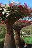 Getty center gardens (David Cabrera Ortiz) Tags: los angeles hollywood getty sea world san diego califonia 2016 zoologico zoo center gardens museum flowers veraneras arreglos externos jardin
