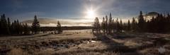 Frosty Yellowstone Morning [Explore] (Michelle Pilling Photography) Tags: yellowstonenationalpark frosty morning panorama wyoming foggy mist