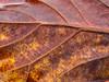 Fallen Leaf (Ken Mobile) Tags: new nature leaf florida year olympus sarasota sarasotabay em5 1454mmf2835 micro43 kenmobile