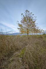 (Spiros_Gioldasis) Tags: winter sky tree landscape nikon long exposure greece nd fields spiros  agrinio aitoloakarnania   westgreece tokina1116mm   spirosgioldasis gioldasis nikond7100
