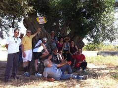 Nel tronco di un ulivo secolare (Braccio Sudest)
