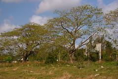 Vistas del Valle de Camajuaní (lezumbalaberenjena) Tags: camajuani camajuaní cuba villas villa clara 2009 campo campiña lezumbalaberenjena