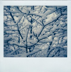 Snowy Branches (Irrational Photography) Tags: polaroid theimpossibleproject impossible project retro vintage antique analogue analog hipster film photo picture onestep onyx spectra se sun 600 660 sonar autofocus slr 680 montreal quebec canada snow fall tree trees branch branches white black blue light nature natural lines cold winter wet koala meatpie meat pie koalameatpie christmas holiday holidays xmas hanuka irrational photography