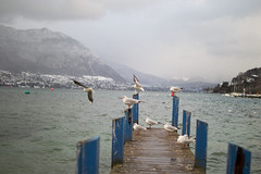 Seagulls - Lake Annecy (michael.genty) Tags: winter seagulls mountain lake snow france annecy fog clouds lac neige pontoon mouettes