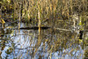 10112014-IMG_0647 (charme.nature) Tags: eau lumière paysage marais reflets allrightsreserved citrit charmenature chertogen