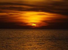 The sunset (Nature Photography and Fine Art) Tags: sunset brazil praia nature beautiful animals brasil wildlife natureza pôrdosol finepix stunning fujifilm apa discovery naturephotography sãopedrodaaldeia lagoadeararuama pwlandscape praiadafarinha apadesapiatiba brazilsanimals