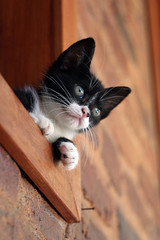 Kitty Watch (Rodrigo Neves - Catching up with your great work s) Tags: canon vintage fur eos 350d furry chat pussy kitty whiskers gato m42 russian 58mm manualfocus helios 44m4