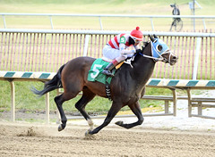 "2015-01-02 (35) r3 Roimes Chirinos on #5 Around We Go (JLeeFleenor) Tags: photos photography md marylandracing marylandhorseracing jockey جُوكِي ""赛马骑师"" jinete ""競馬騎手"" dżokej jocheu คนขี่ม้าแข่ง jóquei žokej kilparatsastaja rennreiter fantino ""경마 기수"" жокей jokey người horses thoroughbreds equine equestrian cheval cavalo cavallo cavall caballo pferd paard perd hevonen hest hestur cal kon konj beygir capall ceffyl cuddy yarraman faras alogo soos kuda uma pfeerd koin حصان кон 马 häst άλογο סוס घोड़ा 馬 koń лошадь jockeys bay maryland"