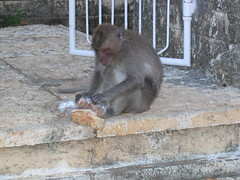 Macaque Seeing What He Packed For Lunch
