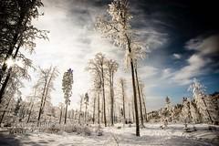 Dreamy (KPictures Fotografie) Tags: winter snow bavaria nikond600 nikonflickraward
