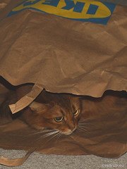 Caithlin in Ikea, 2 (Finn Frode (DK)) Tags: cats ikea bag paper play som somali somalicat hideout paperbag caithlin dusharacathalcaithlin