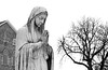 A Winter's Day (peterkelly) Tags: bw ontario canada tree church statue digital prayer praying guelph northamerica virginmary churchofourladyimmaculate basilicaofourladyimmaculate