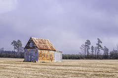 love these old barns around my area (Hoot Owl Photography) Tags: nature girl river nikon photographer natural exploring hipster funday richmond adventure teen selftaught blonde belle hd riverbank smithfield isle 757 rva lightroom hamptonroads explosure d5000 photoshopcc