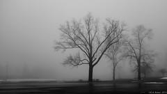 """Foggy Morning at Lawton Park"" (D A Baker) Tags: quiet black white fortwayne fort ft wayne indiana ind foggy fog shroud blanket conceal january morning fuji fujifilm x100s urban da baker danielbaker tree trees silhouette downtown clinton fourth daniel"
