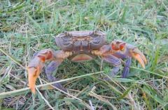 crab (bilal gldoan) Tags: life people nature beautiful grass animal rose nikon eagle air crab gl yenge hayat insan hava gzel dogan hayvan imen kartal
