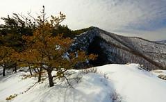North Fork Mountain: Ridge line (Shahid Durrani) Tags: winter mountain snow west forest virginia north fork national monongahela