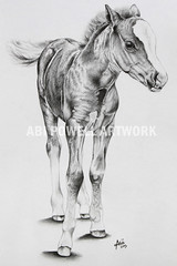 Pencil Drawing, Pablo (AbiiMedia) Tags: art pencil sketch drawing fineart pony abi reallife realism pencildrawing foal sectiona welshpony abii welshsectiona abiimedia abipowell abipowellart abiipow