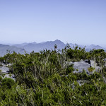 Sky Garden on the summit of Bluff Knoll thumbnail