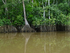 The Suriname River at a Low Level