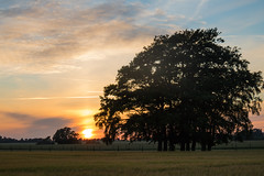 Summer evening on the Countryside (Infomastern) Tags: sunset sky cloud tree landscape countryside trd solnedgng landskap sdersltt landsbygd