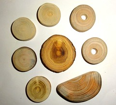 Natural wood mix, jewelry findings supplies, parts for jewelry makers (john bonham2) Tags: naturalwood woodslices jewelrysupplies jewelryfindings jewelrycrafts jewelry supply findings wooden mix natural slices texture colors