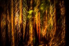 Forest Redo (richham14 - (Mr Cubs}) Tags: california trees yosemite richardhammond richham14
