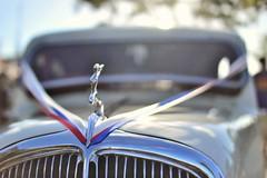 vintage (tewhiufoto) Tags: tewhiufoto nikon d3100 flickr tewhiu french vintage car sigma automobile auto sigma30mmf14exdchsm france hood ornament european europe citron citrontractionavant 1934 andrlefbvre flaminiobertoni closeup vehicle eingefangen