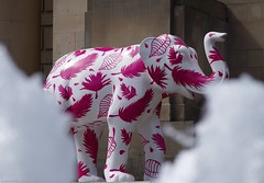 Herd of Sheffield elephant sculptures (6) (Simon Dell Photography) Tags: herdofsheffield herdof sheffield herd eliphants statues town city sculptures colorfull awsome 2016 trail see find them locations