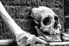 Crane Mask (elweydelasfotos) Tags: mexico skull crane black white contrast detail creepy death dead mask bones nikon graveyard grave panteon travel tourism