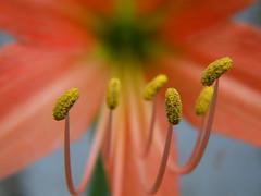 Flower macro (mihir_dhandha) Tags: yellow closeup olympussp570uz
