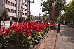 P1280850 (Jusotil_1943) Tags: seales trafico farola ladrillos esfera flores rojas red