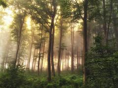 Wald im Nebel (blichb) Tags: 2016 bayern deutschland iphone inning iphoneography nebel sommer2016 wald blichb sommer inningamammersee de
