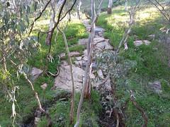 20160716_144026 (StephenMitchell) Tags: adelaidegreenhills nature organic trees gully valley hill mountain blackwood belair edenhills southaustralia trek walk creek rock stone