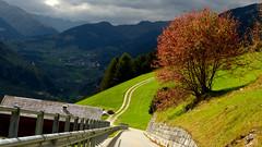 Cuesta abajo (Miradortigre) Tags: suiza sumtvig romanche graubunden grisones camino road valle valley landscape paisaje suisse  schweiz  vica  zwitserland svizzera    isvire