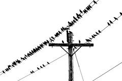 party line (Port View) Tags: fujixe2 novascotia canada 2015 birds pole wires wire line utility telephone sky blackandwhite bw mono monochrome