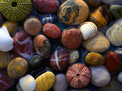 My Tide Pool (BBMaui) Tags: pebbles pebble rocks rock stone stones water stream river riverbed ocean sea beach aegean aegeansea life seashell nature earth beauty exotic bright shiny sunny colorful colourful red yellow pink purple orange green blue gray color colour macro closeup dark manualfocus mediterranean maviyolculuk bluevoyage seaurchin tidepool sand