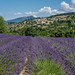 """2016_Vaison_Fuji_XT_10-163 • <a style=""""font-size:0.8em;"""" href=""""http://www.flickr.com/photos/100070713@N08/28561492382/"""" target=""""_blank"""">View on Flickr</a>"""