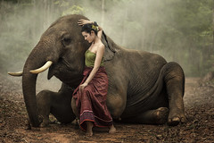 Woman with elephant. (visootuthairam1) Tags: adult animals area asia asian culture ears elephant forest gold grass indigenous ivory large mahout male mammal men monk national nature novice orange outdoors people person praying religion robe round saffron scene sitting sunrise symbol tall thai thailand pet positive resting season seasonal security strong
