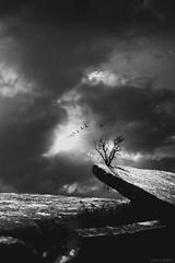 Desolation (slivinska) Tags: tree bird monchrome blackandwhite light surreal roots landscape clouds heaven minimalism alinasliwinska amarillis