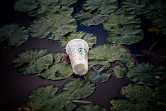 garbage (timp37) Tags: cup coffee starbucks garbage lily pad long john slough little red schoolhouse october 2016 illinois