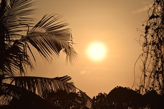 Through the Tropical Veil (The Spirit of the World) Tags: plants foliage ferns jungle sun sunset light india kochi cochin kerala southernindia nature abstract veil silhoulettes