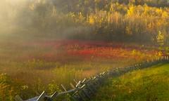 Light Values (popago) Tags: field outdoor serene foliage autumn blueridge fog golden canon earlymorning red yellow landscape